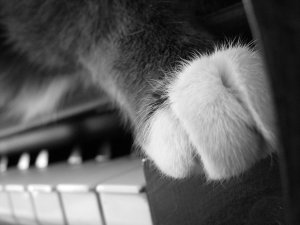 cat paw on piano